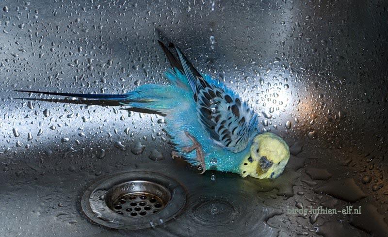 фото попугая.
